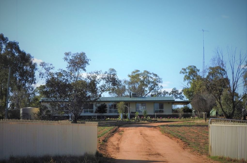Cypress Avenue – Weethalle